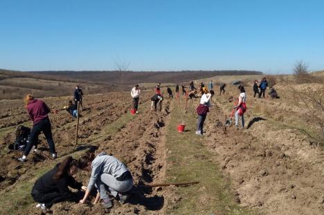 """""""O pădure cât o țară"""": Ministerul Mediului vrea să planteze 2.500 de păduri noi. Una va fi la Oradea"""