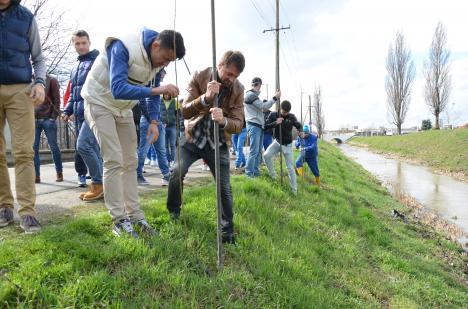 ABA pe lângă lege: ABA Crişuri a ajuns să defrişeze copacii pe care chiar instituţia i-a plantat pe malul Peţei (FOTO)