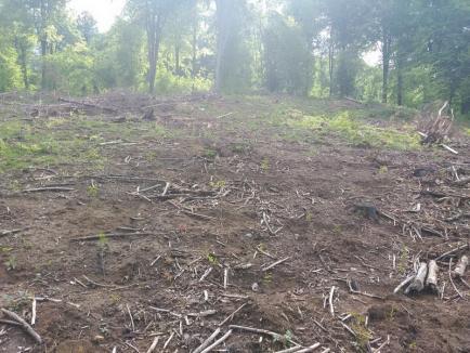 Direcţia Silvică Bihor: Peste 1 milion de puieţi, plantaţi în pădurile din judeţ în această primăvară (FOTO)