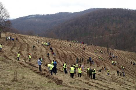 Luna plantării arborilor: Direcţia Silvică va împăduri peste 122 de hectare