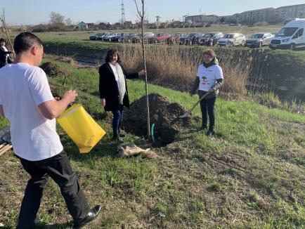 Termoficare Oradea, acțiune de voluntariat! Avem grijă de aerul pe care îl respiri! (FOTO)