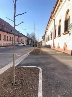 Municipalitatea a plantat un aliniament de platani şi tei de-a lungul străzii Mihai Eminescu (FOTO)