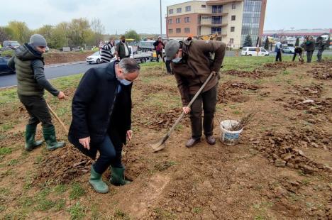 Viceprimarul Marcel Dragoş a plantat arbori pe marginea şoselei de centură în zona Pieţei 100 (FOTO)