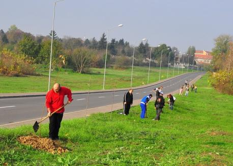Toamna se numără puieţii: RER Ecologic Service va planta în oraş aproape 800 de copaci (FOTO)