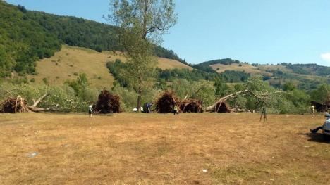 Şeful ISU Crişana: 'La Bulz, plopii au căzut ca un castel de cărţi' (FOTO)