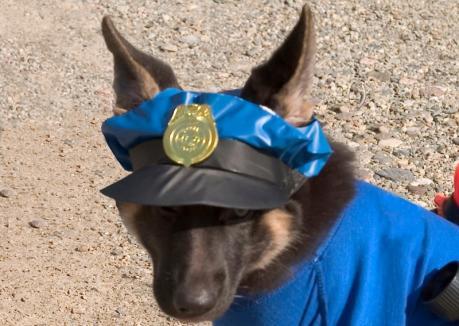 Concurenţă la Poliţia animalelor în Bihor: s-au înscris 87 candidaţi pentru 3 posturi de agent, 28 candidaţi pentru un post de ofiţer