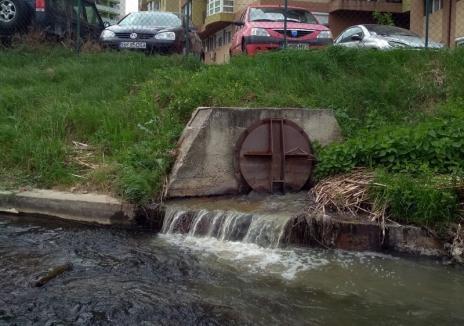 Poluare pe Peţa: Resturi menajere deversate în pârâu, în zona Nufărul (VIDEO)