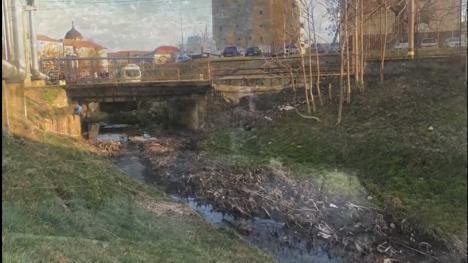 Poluare pe pârâul Adona din Oradea! Apă cu sedimente, miros puternic şi spumă în dreptul depoului de tramvaie OTL (FOTO / VIDEO)