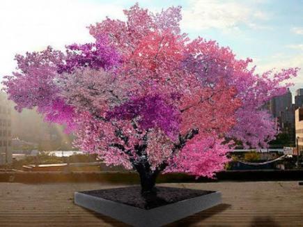 40 de fructe într-un singur pom