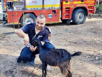 """""""Mulțumim, Grecia!"""". Pompierii români, impresionați de un băieţel care le-a adus plăcinte și porumb fiert (FOTO)"""
