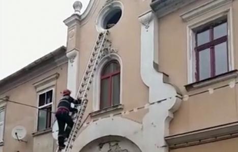 Eroi şi pentru necuvântătoare: Pompierii orădeni au salvat o pisică rămasă captivă în podul Teatrului Arcadia (VIDEO)