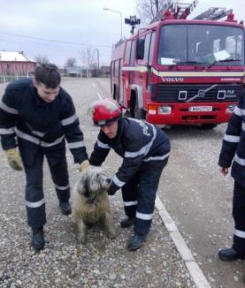Pompierii bihoreni au salvat un câine căzut într-o fântână