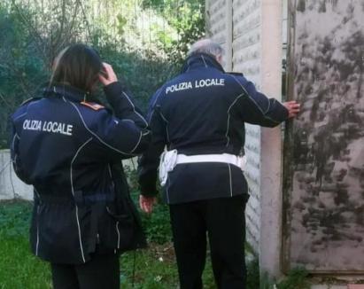 Patru români din Italia riscă închisoarea pentru că au tăiat porcul în curte (FOTO)