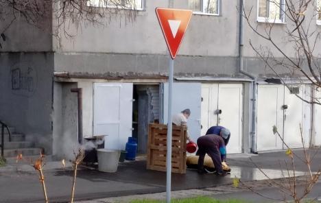 Un bărbat din Oradea a tăiat porcul... în spatele blocului
