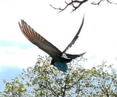 Ne enervează: Măștile de protecție aruncate de orădeni afectează inclusiv păsările (FOTO)