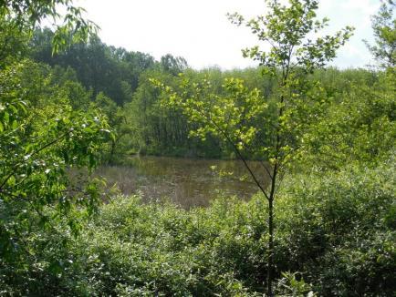 Ecotop a atras bani europeni pentru situl Săcueni şi Lacul Cicoş (FOTO)