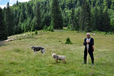 Nu doar puşca e soluţia: Ciobanii din Bihor ţin urşii şi lupii la depărtare folosind câini şi garduri electrice (FOTO / VIDEO)