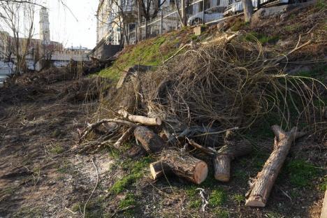 Protest împotriva tăierilor de copaci de pe malul Crișului. Printre combatanți, mai mulți membri USR și PSD (FOTO / VIDEO)