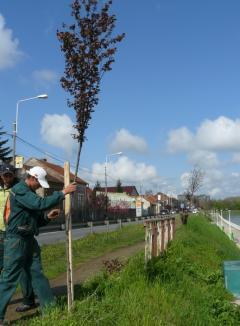 Începe plantarea celor 1.200 de arbori şi arbuşti