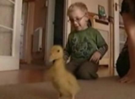 Un copil cu pareză merge datorită unei răţuşte (VIDEO)