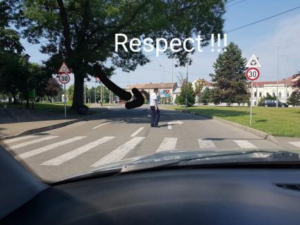 Răţuşte norocoase: Un poliţist rutier a oprit traficul în Oradea pentru a le permite unor răţuşte să traverseze (FOTO)