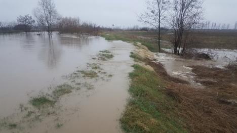 Râurile dau pe-afară: ABA Crişuri a intervenit în Viişoara şi Suplacu de Barcău pentru a scoate apa din gospodării