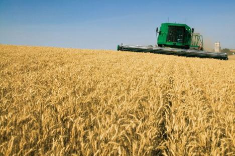 România se pregăteşte de cea mai bună recoltă de grâu de după 1989