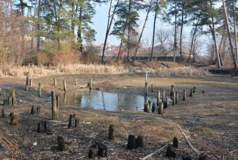 Primăria Sânmartin vrea pod peste lacul Peţea şi monitorizarea liliecilor din Betfia