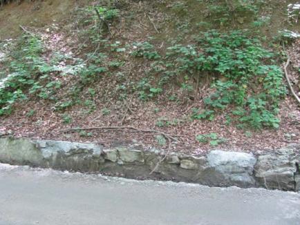 Bani aruncaţi în drum: Firma PDL-istului Ovidiu Moldovan şi-a bătut joc de drumul Pietroasa-Boga (FOTO)
