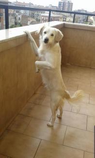 Execuţia lui Rocky: Câine împuşcat în cap, în apropierea casei proprietarilor, în satul Avram Iancu (FOTO)