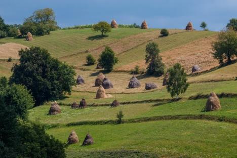 Ecologiştii bihoreni, cu ochii pe parlamentarii care ne reprezintă: Bodog, Cseke şi Derzsi au votat proiectul care va distruge ariile protejate
