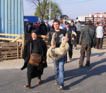 Hala de sacrificare a mieilor din piaţa Ioşia va fi deschisă în perioada 13-23 aprilie