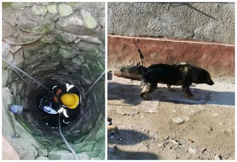 Câine căzut într-o fântână adâncă de 10 metri, salvat de pompierii din Bihor (FOTO / VIDEO)