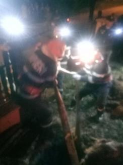 Cal căzut într-un puţ adânc de doi metri, salvat de pompierii din Marghita (FOTO / VIDEO)