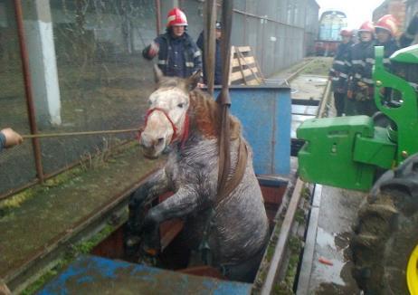 Cal salvat de pompieri dintr-o groapă adâncă de doi metri (FOTO)