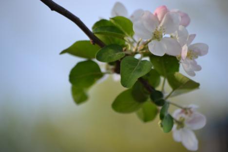 Floriile: Sărbătoarea intrării lui Iisus în Ierusalim care anunţă Paştele