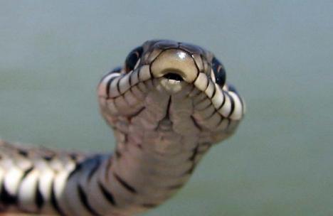 Atenţie pe unde călcaţi în vacanţă! Alt tânăr muşcat de şarpe