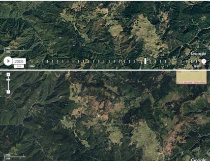 Activiştii USR, nemulţumiţi că Garda Forestieră pune defrişarea a 1.000 hectare din Padiş pe seama unor... furtuni şi gândaci