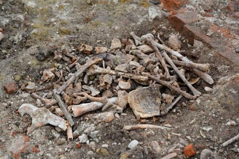Cimitir medieval, scos la iveală de săpăturile arheologice din centrul Oradiei. Vezi IMAGINI!
