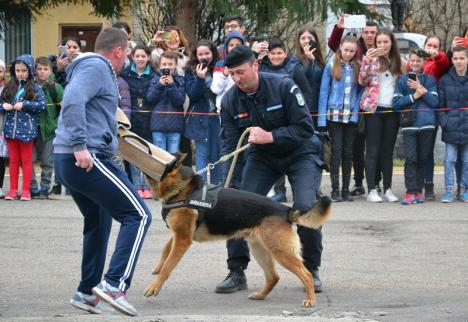 Jandarmeria în sărbătoare: Exerciţii demonstrative şi paradă militară, pentru orădeni, în Parcul 1 Decembrie