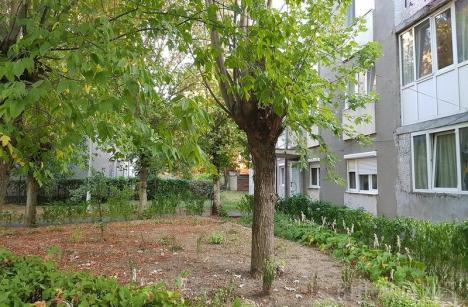 Primăria Oradea nu renunță! Asociaţiile de proprietari vor fi obligate să întreţină spaţiile verzi, în baza legislaţiei privind protecţia mediului