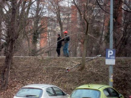 Orădenii continuă să reclame tăierile făcute la copaci pe Splaiul Crişanei