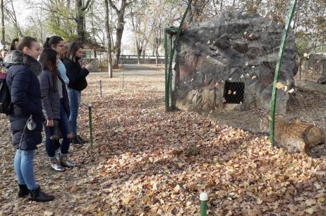 Lecție de jurnalism la Zoo Oradea (FOTO)
