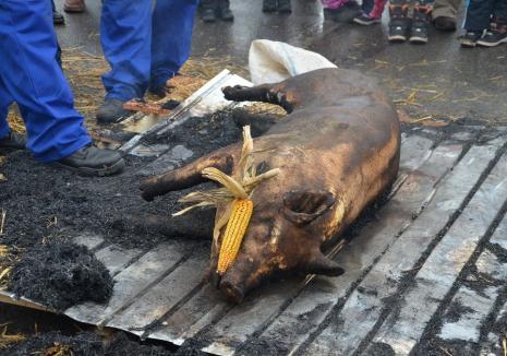 """Cu ochii pe porci: DSVSA avertizează bihorenii să nu cumpere carne din surse neautorizate, iar crescătorii să nu """"plimbe"""" animale din zone cu pestă porcină africană"""