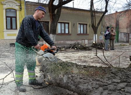 Niciun sfert! Comisia consultativă a aprobat doborârea a doar 8 arbori din cei 36 propuşi pentru tăiere