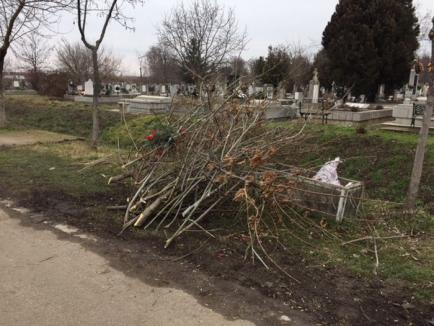 S-au oprit în parc, au început în cimitir: Angajaţii Cimitirului Municipal din Oradea taie arborii dintre morminte