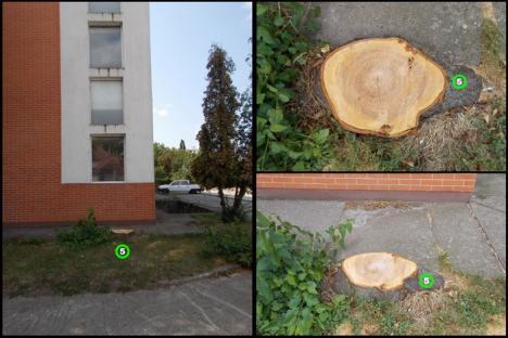 Fără pomi fructiferi! Universitatea din Oradea a tăiat nuci, cireşi şi duzi din campus (FOTO)