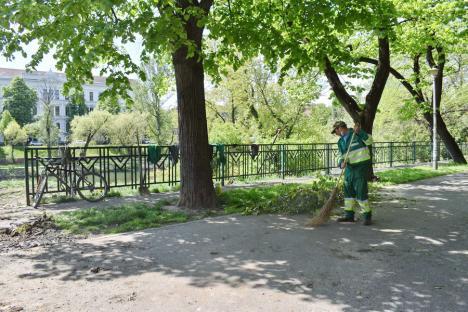 """""""Masacru"""" verde în inima Oradiei: Primăria a început tăierile de copaci din lunca Crişului (FOTO)"""