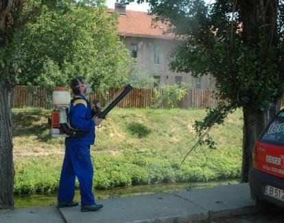 Primăria omoară ţânţarii din oraş