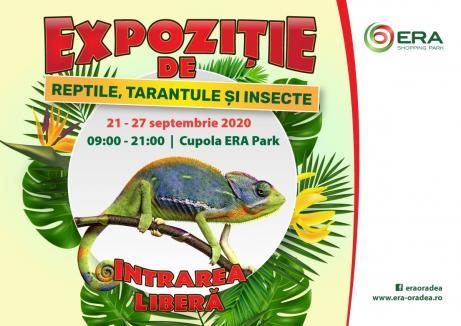 Unde ieşim săptămâna asta în Oradea: Expoziţie de tarantule, şerpi, şopârle şi scorpioni la ERA Park